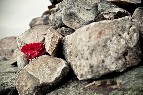IMG_8024 - A lone rose left in the summit cairn by another walker