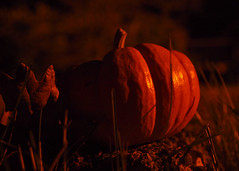 October in Autumn () Tags: light orange holiday halloween night season pumpkin outside outdoors evening miniature photo washington october shadows close view state image little small picture mini nighttime photograph tacoma