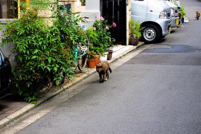 Today's Cat@2011-10-02