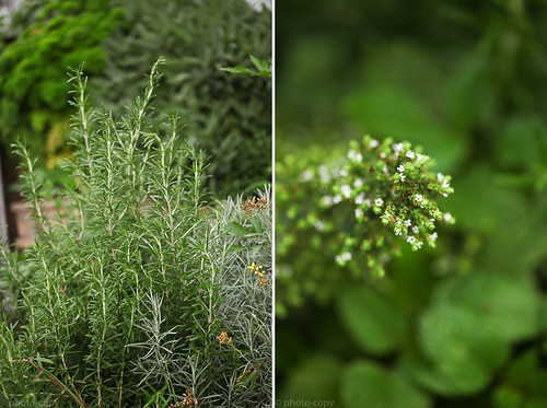 rosemary_citronella
