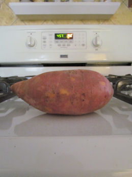 Giant Sweet Potato
