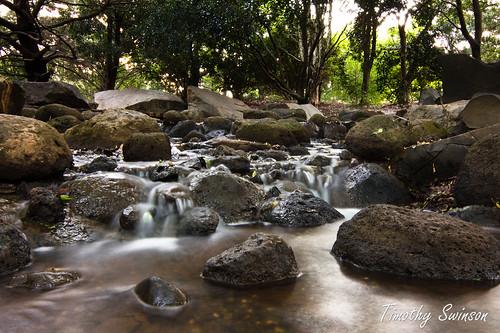 Toowoomba Japanese Gardens-3
