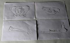 xactly 5/5 (hey-bulldog) Tags: life white paper out skull still cut jaw study bones bone hip femur mandible coxyx