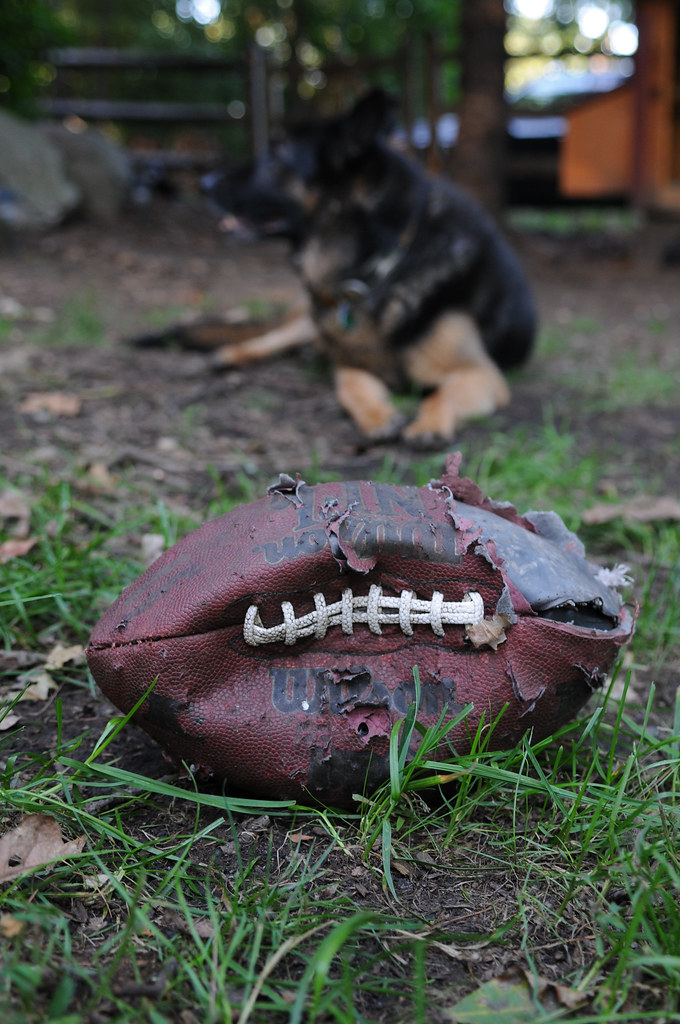 Max the German Shepherd & the Football