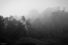 Layers of vegetation (stalin.sm) Tags: mist kerala wayanad mistymorning vythri padinjarathara