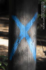 Gebo  (Myrkwood666) Tags: symbol pagan rune futhark gebo asatru gyfu seelenwinter mrkskygge myrkwood666