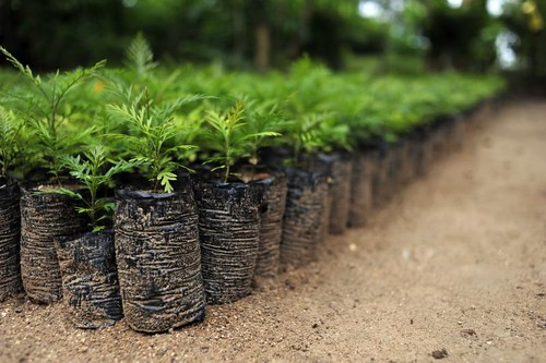 NP climate-smart farm 25