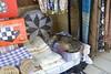 buy one scarf, get one cat free (mdanys) Tags: cat cyprus turkish kibris nicosia lefkosia northerncyprus danys mdanys