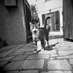 Meeeeow! (guido.masi) Tags: blackandwhite film cat holga lomo 400 hp5 gatto ilford talamone maremma argentario
