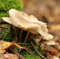 Fijn weekend (Waterjuffer1) Tags: oktober mushroom herfst paddenstoel heide 2011 beegderhei waterjuffer1