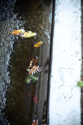 Leaves floating in gutter
