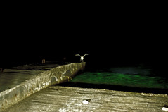 (katerina saranti) Tags: blue sea bird night flying rodos thalassa leuko paraleia pouli nukta afantou eksedra nuxta traounou fterougisma
