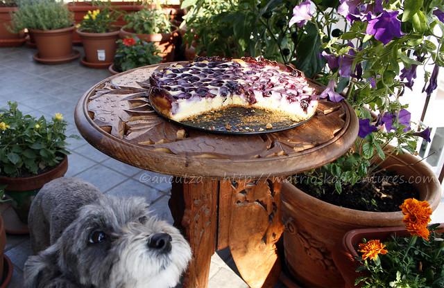 immagine di buon lunedi' con cane e torta