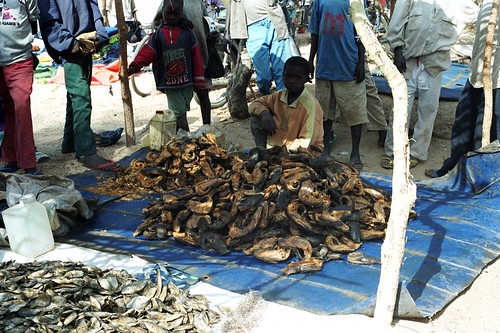 Dried fish, photo by Chris Bene, 2003
