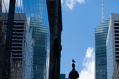 Stranger in a strange city (Catch the dream) Tags: city sky usa ny newyork reflection buildings cityscape skyscrapers unitedstates pigeon horizon stranger metropolis