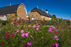 Cosmos & Barns (ETCphoto) Tags: flowers michigan barns traversecity botanicalgarden cosmos communitygarden 7397 gtcommons