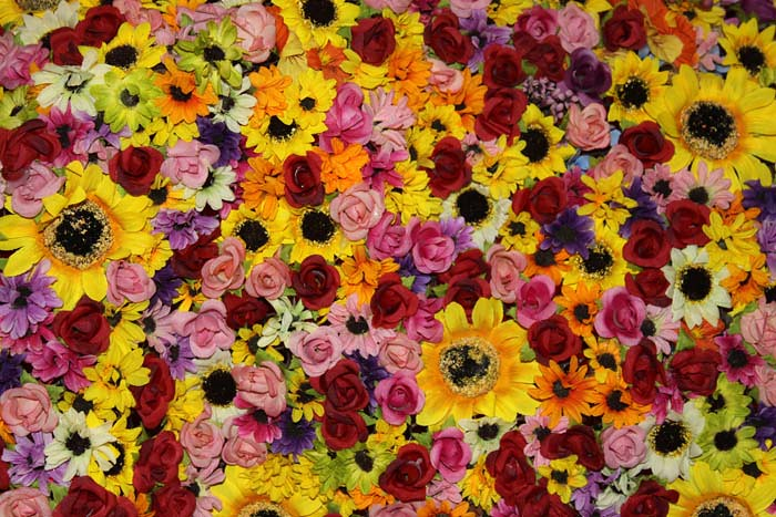 цветы тайваня