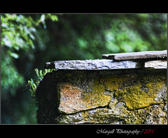 The old stones wall -  Jupiter 200mm f4 m42 (Margall photography) Tags: old stone wall photography moss bokeh m42 marco jupiter f4 200mm galletto 21m margall