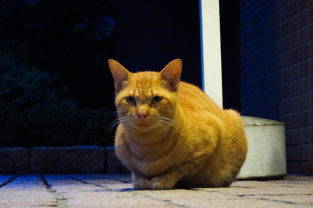 Today's Cat@2011-09-20
