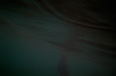 Seal (simon clare photography) Tags: travel wild england art english simon nature animal animals digital 35mm photography li photo nikon cornwall clare foto fotografie photographie underwater wildlife south ska lizard explore seal ng ho fotografia fotografi  fotografa fotografering larawan   ffotograffiaeth sary picha  d40 consequat ljsmyndun fotoraflk  fotograafia igbo fotografija valokuvaus sawir   fnykpezs fotografovn fotografana simonclare  fotografovanie pagkuha grianghrafadireacht simoncphotography  sclarephoto whakaahua  kujambula ftoyiya argazkilaritzac