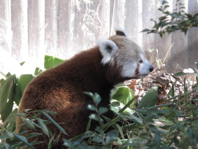 Zoo 0373
