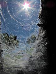 Spidersun (Tlio Tsuji) Tags: campus gps seca caxias tulio queimada tsuji ifma