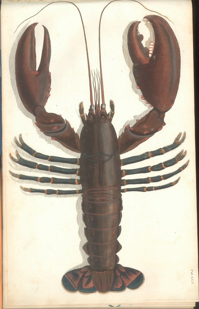 Versuch einer Naturgeschichte der Krabben und Krebse e
