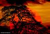 5180844474 (coral.hen4800) Tags: trees sunset red sky sun yellow set sunrise gold golden niceshot rise wow1 wow2 wow3 treeset colorphotoaward bestcapturesaoi mygearandme ringexcellence artistoftheyearlevel3 artistoftheyearlevel4