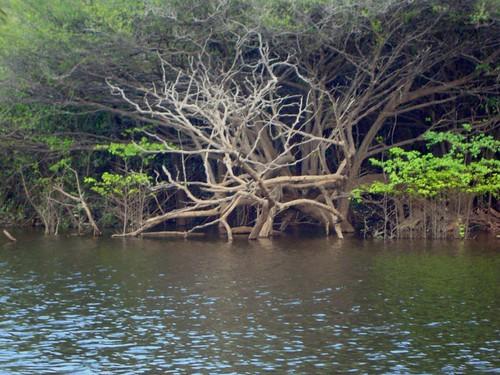 Amazonia201166
