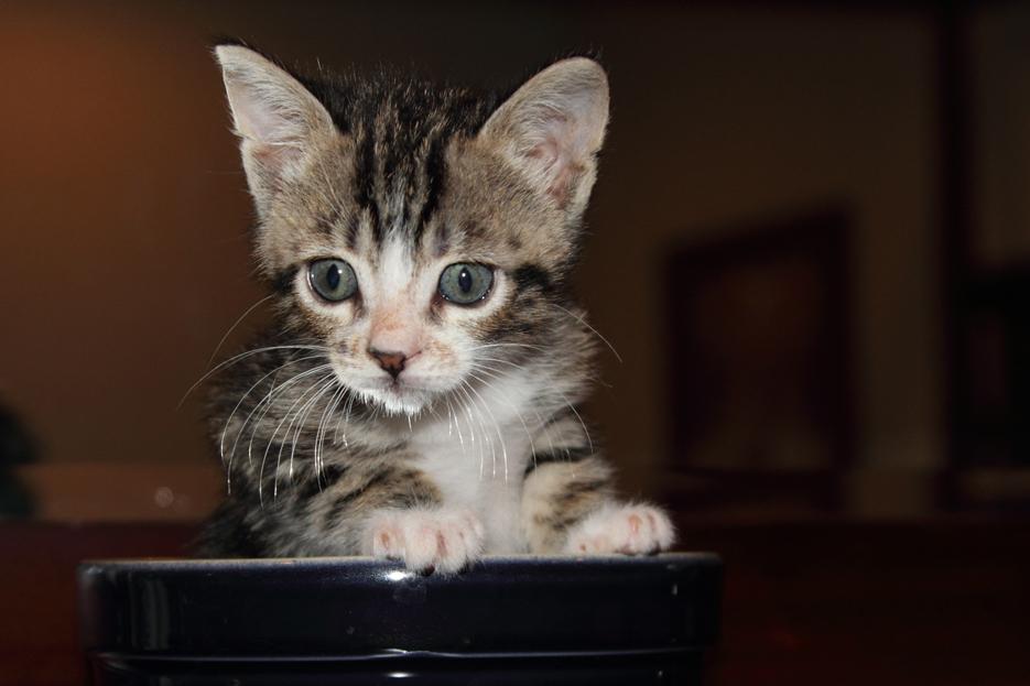 092111_kittens05