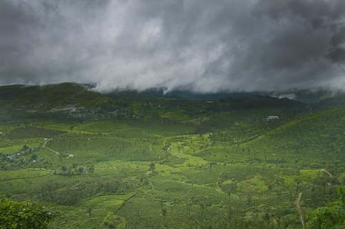 Tea estates under the clouds