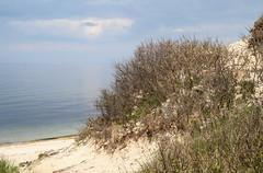 Beach Plum and Long Island Sound (sandy richard) Tags: usa newyork unitedstates geology wildwood calverton wildwoodstatepark newyorkstateparks sandyrichard longislandgeology sandrarichard