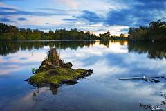 Stumpy (Chris Lishman) Tags: uk trees sky lake water canon landscape swan feather stumpy northumberland stump treestump bolam bolamlake lishman chrislishman welcomeuk