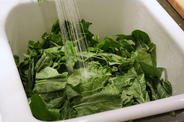 Rinsing Greens