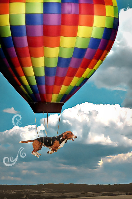 Pup, up and away!