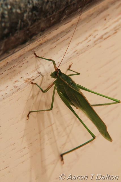 Grasshopper Climbing to Counter