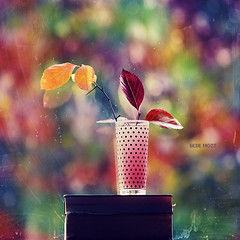 When the nights are chilly (bebe from the block) Tags: pink blue red stilllife reflection green fall glass idea book colorful autum concept dots redleaf yellowleaf blackpolkadots thecolorofautumn