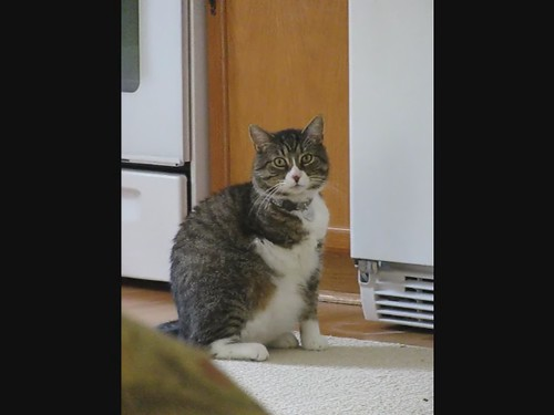 Tre wants food....