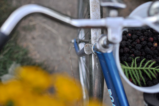 berries-and-bicycle