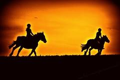 Galloping Horse Silhouette Horse Orange Silhouette