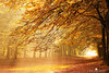 Pans Residence (larsvandegoor.com) Tags: autumn fall forest heiloo