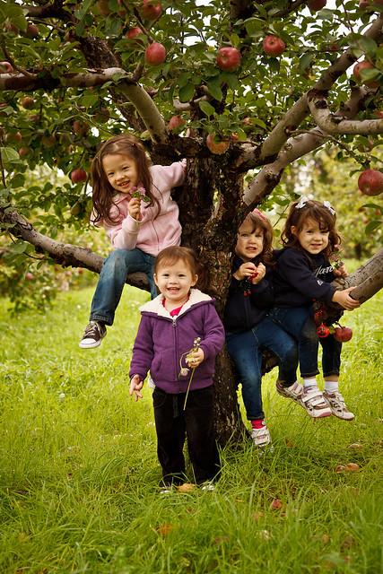 Apple Picking 2011