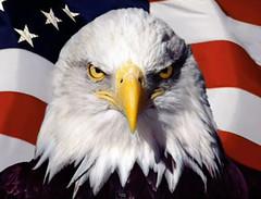 Eagle_US_Flag_01
