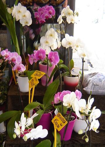 Orkideat Zagrebin torilla by Anna Amnell