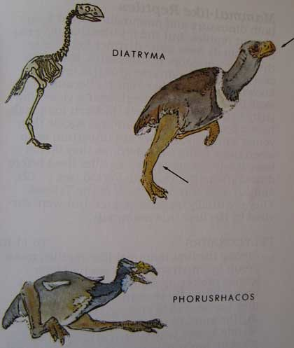 Peterson First Guides: Dinosaurs p. 107