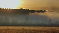 Morning (Timo Vehvilinen) Tags: morning autumn sun mist fog sunrise espoo finland landscape