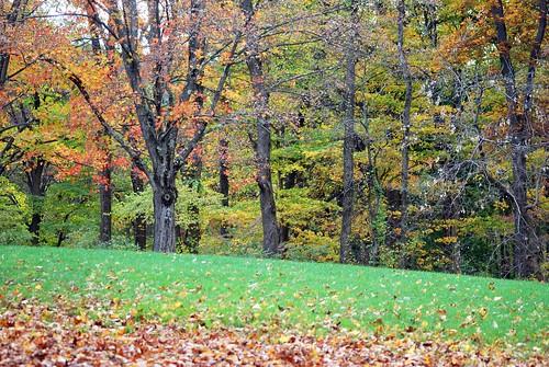 Saturday Fall Colors