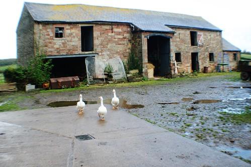 English Farmyard, Beaumont