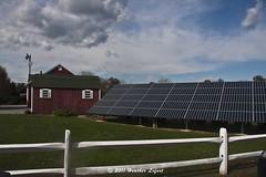 OnTheNorthFork_0035 (Heather Lefo) Tags: horses longisland winecountry longislandbeaches heatherlefort