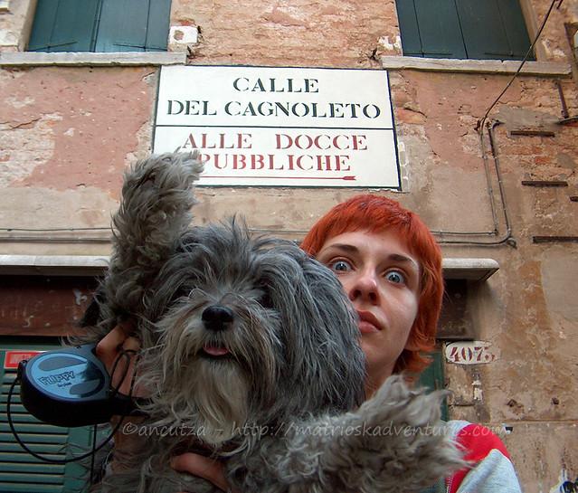 immagine foto divertente cane buffo a venezia